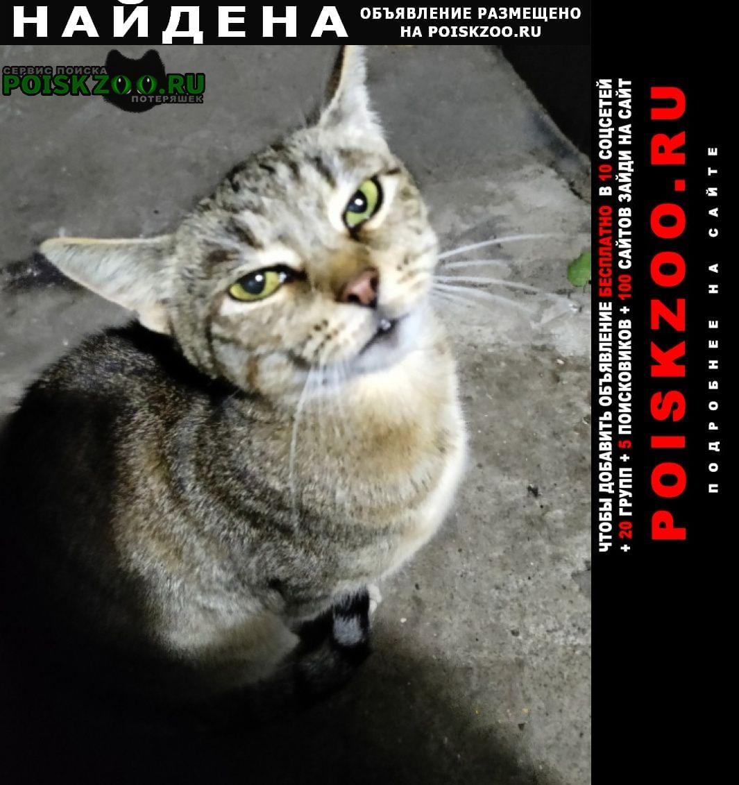 Найдена кошка на уральская 6к1 Москва