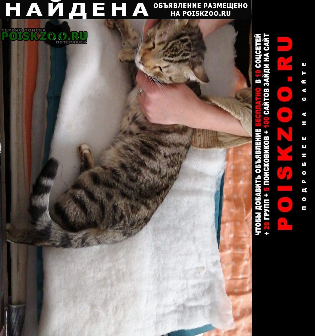 Найден кот Солнечногорск