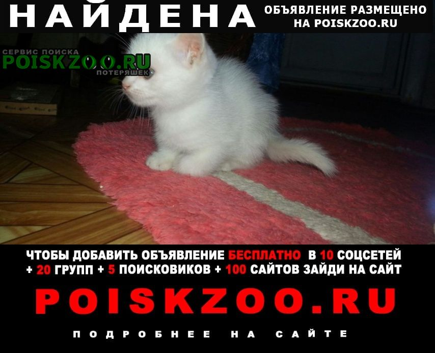 Найдена кошка белый котенок Улан-Удэ