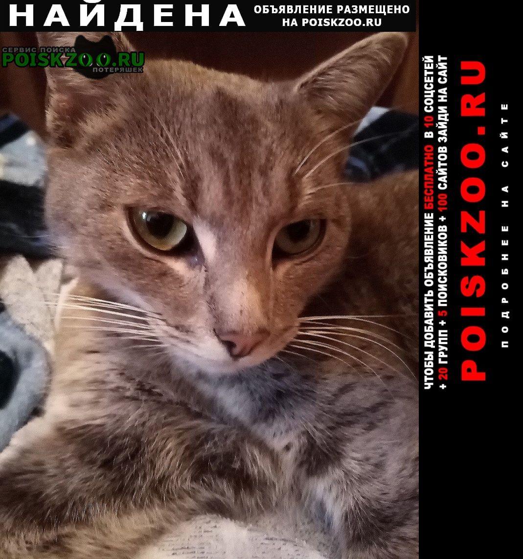 Найдена кошка домашняя серая Долгопрудный