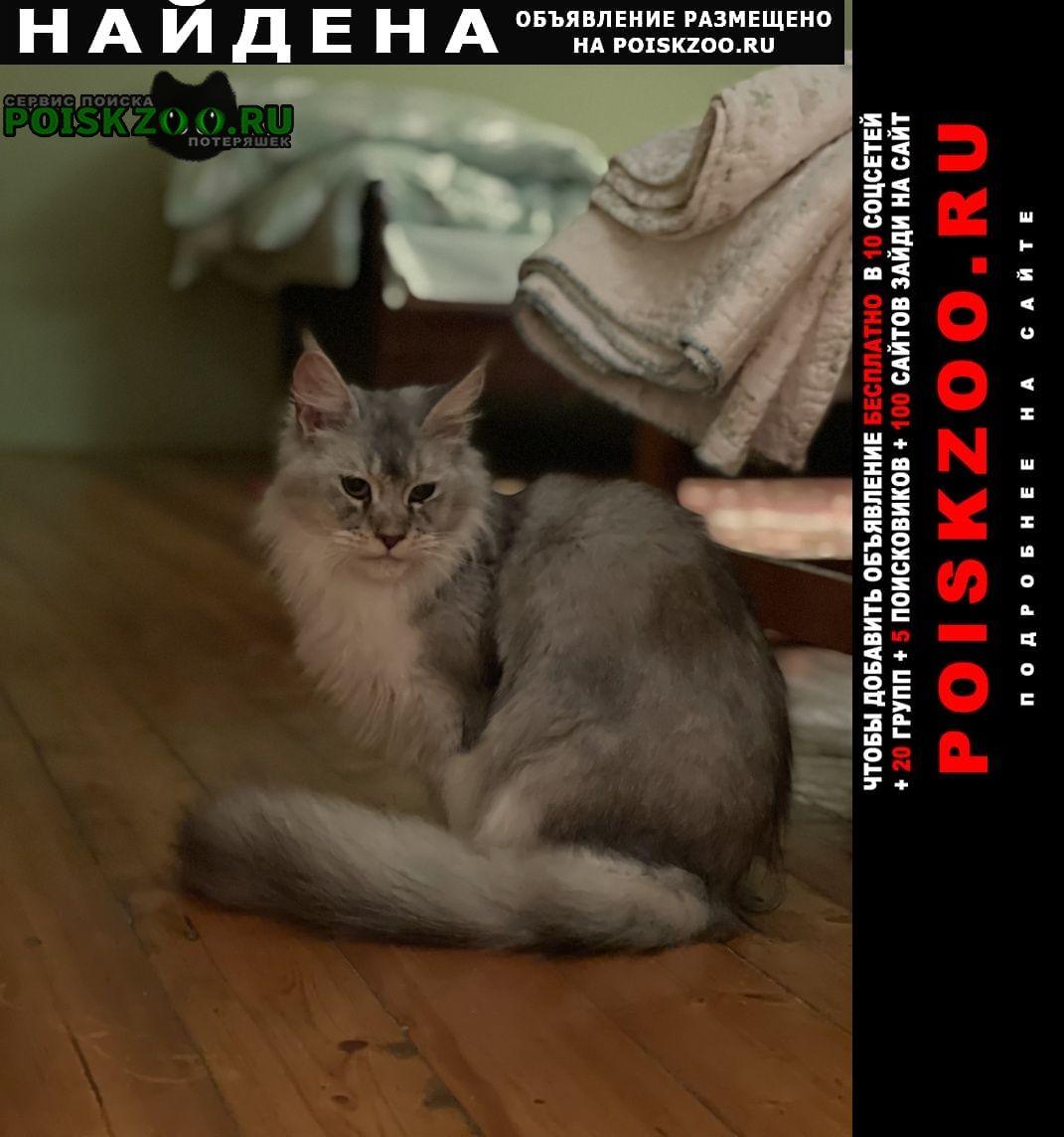 Найдена кошка серый мейкун Москва
