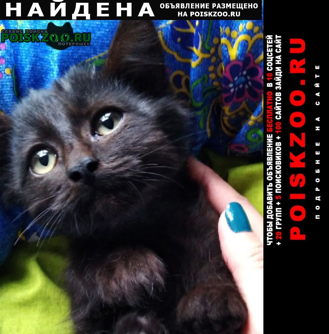 Найден кот чёрный ёнок ищет дом Волгодонск