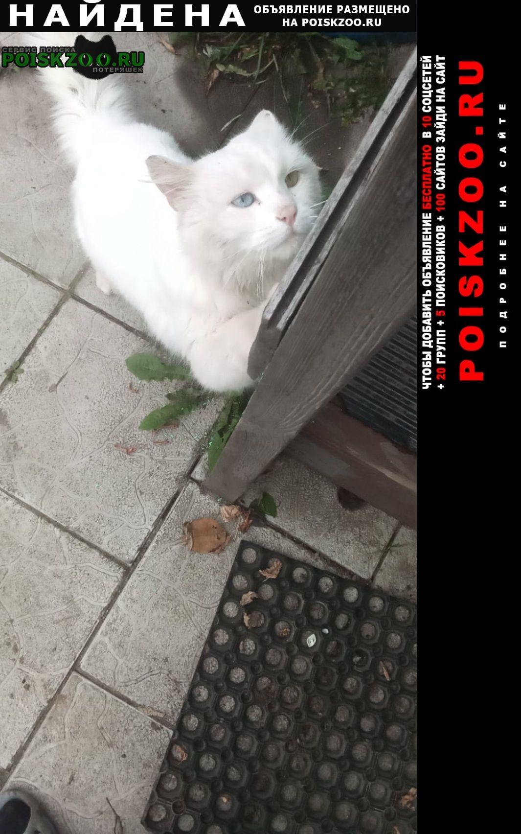 Найдена кошка по деревне гаврилово ходит белый кот Ногинск