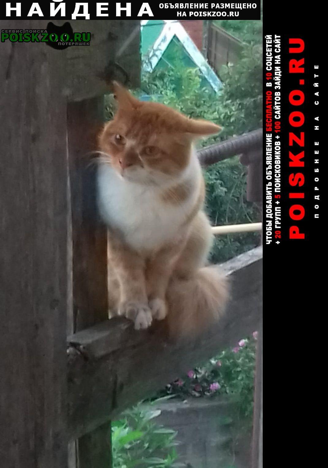 Найдена кошка Сочи
