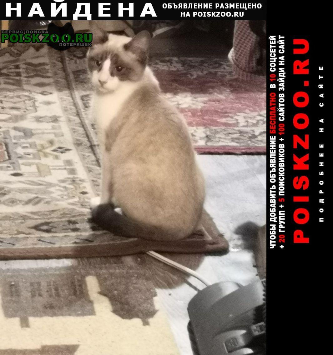 Найден кот Дзержинск