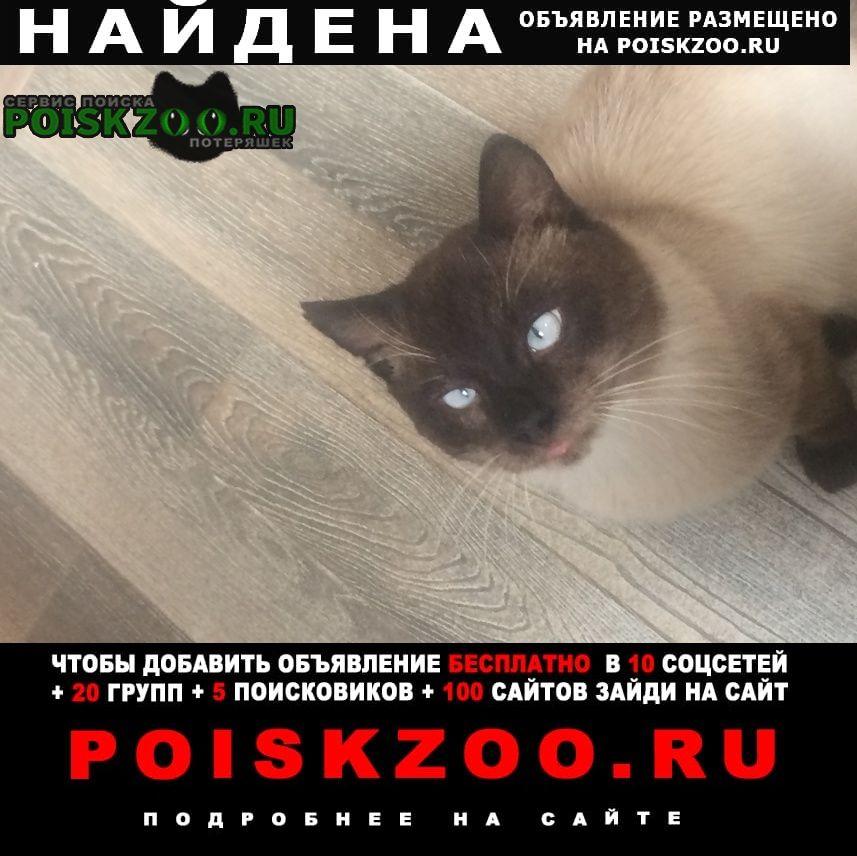 Найден кот 108 км минского шоссе Можайск