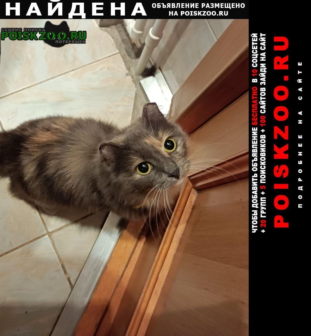 Найдена кошка на ул.доватора Новосибирск