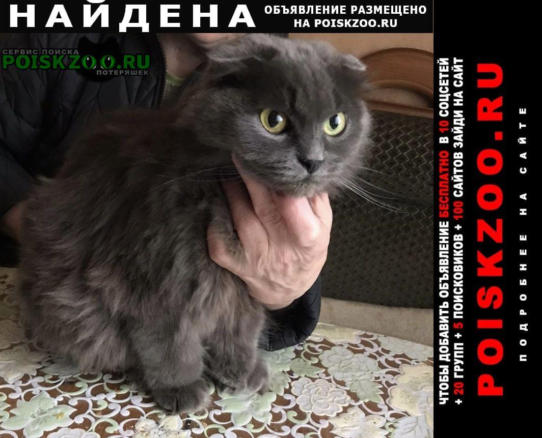 Найдена кошка уральская вислоухая Москва