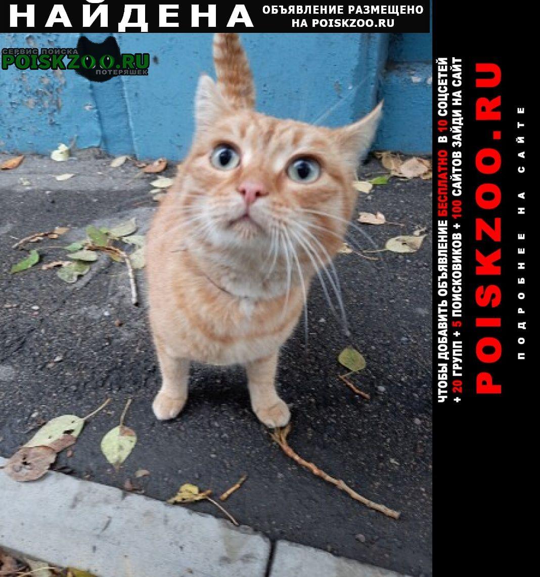 Найден кот в ошейнике Рубцовск