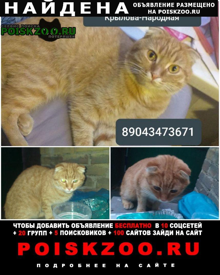 Найден кот рыжий вислоухий Новочеркасск