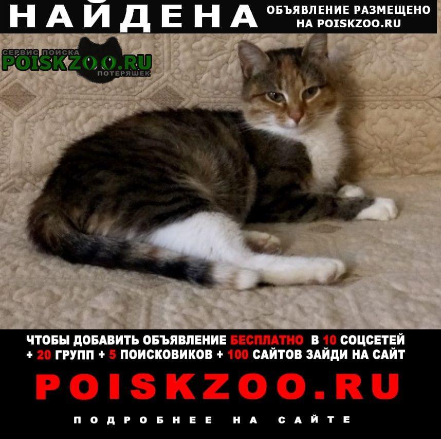Найдена кошка на карьере под причалом Лыткарино