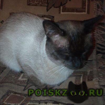 Найден кот сиамский г.Дзержинск