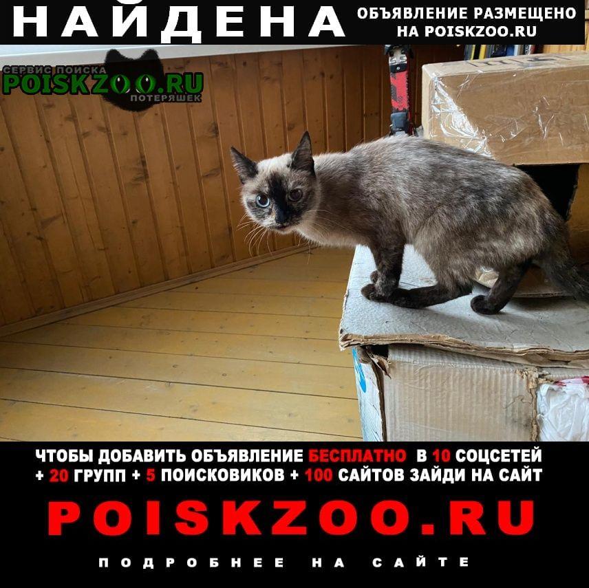 Найдена кошка ул. вешних вод Москва