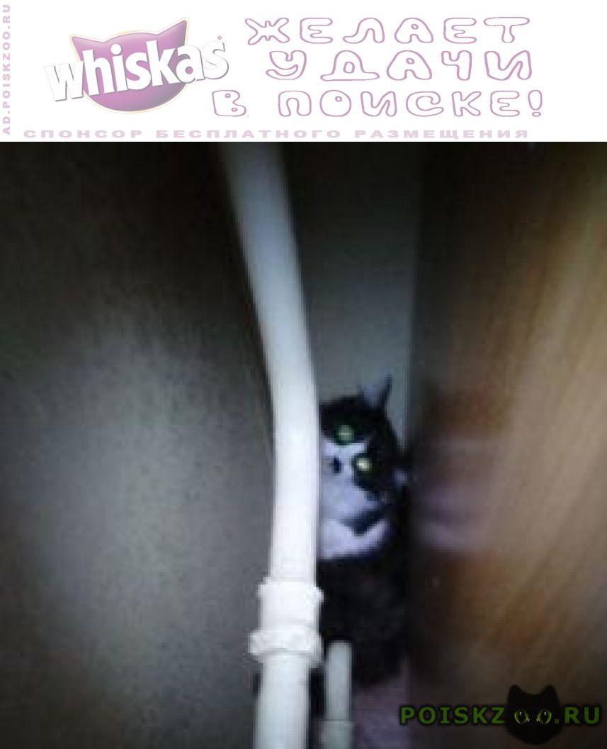Найдена кошка черно-белый пушистый г.Москва