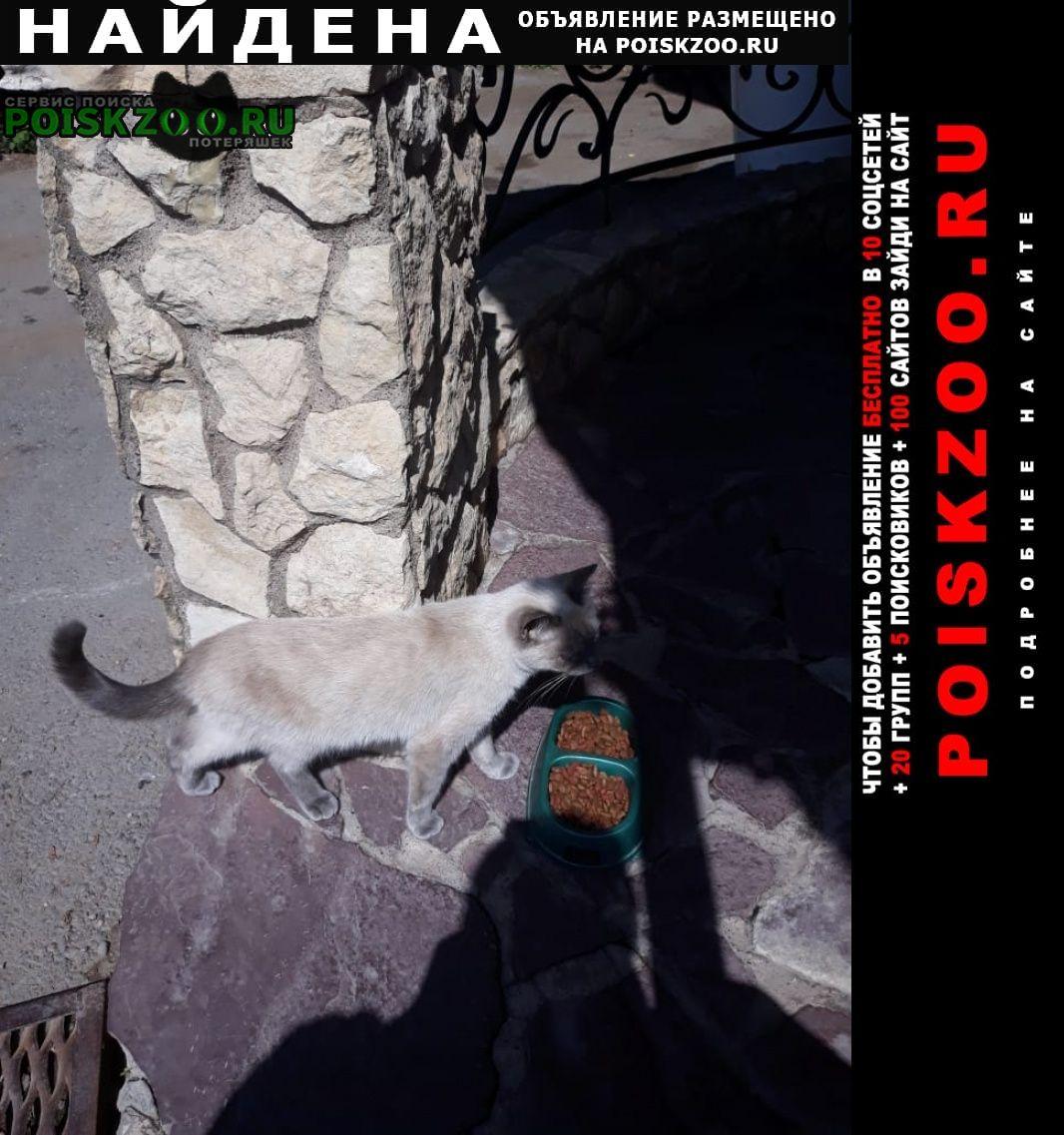 Найдена кошка похожа на домашнюю Уфа