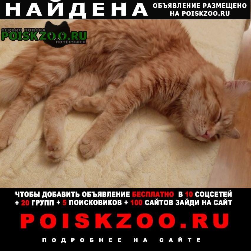 Найден кот Подольск