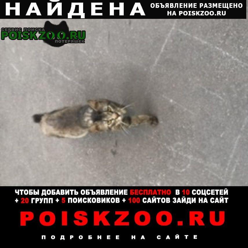 Найден кот, метро рязанский проспект Москва