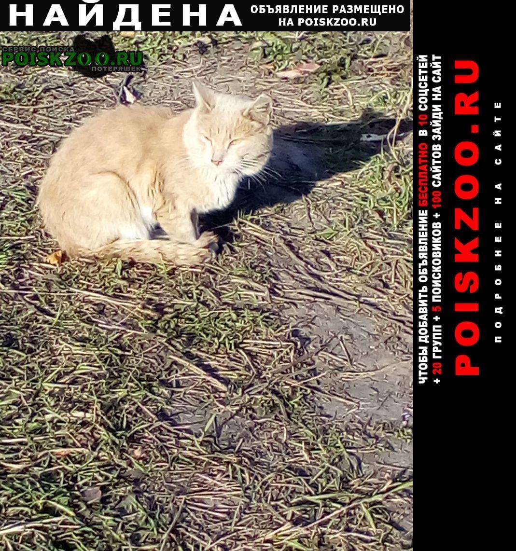Найдена кошка рыжий кот Уфа