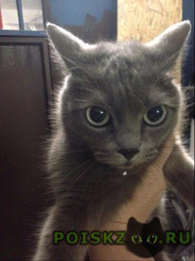 Найдена кошка г.Адлер
