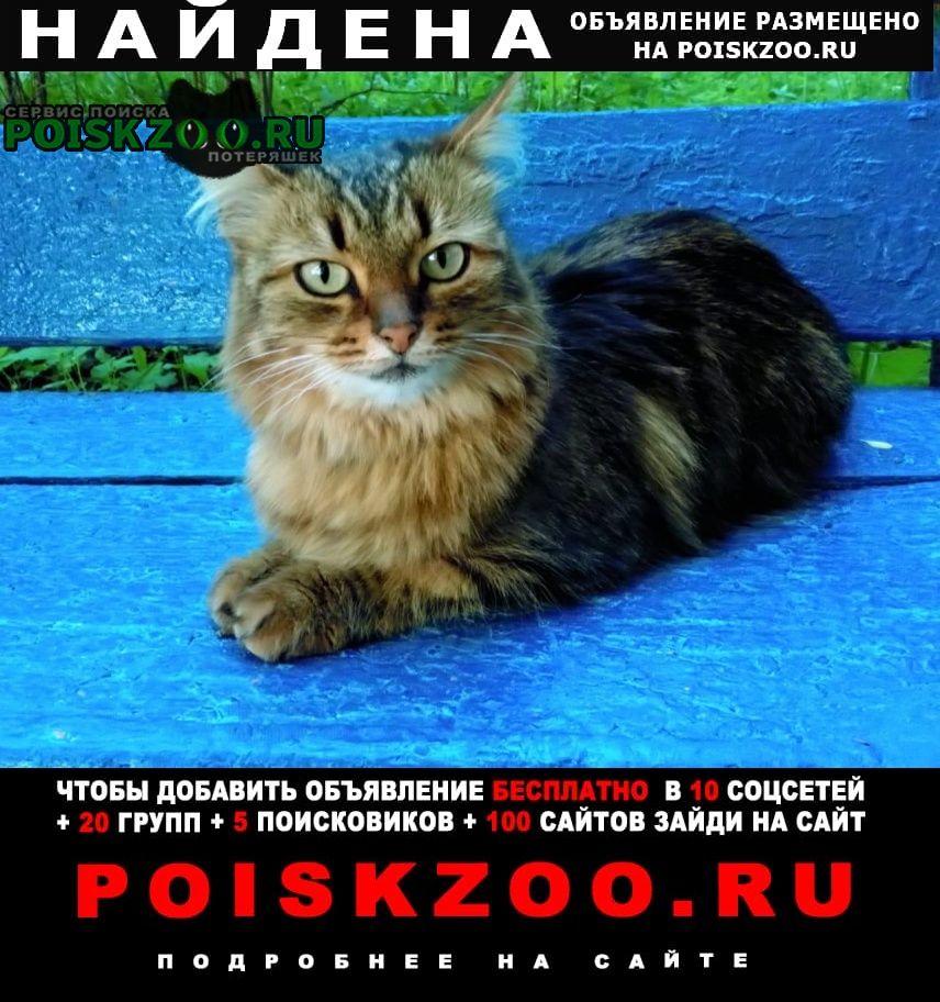Найдена кошка 3 июня на ленинском пр. у дома 83 кор.5 Москва