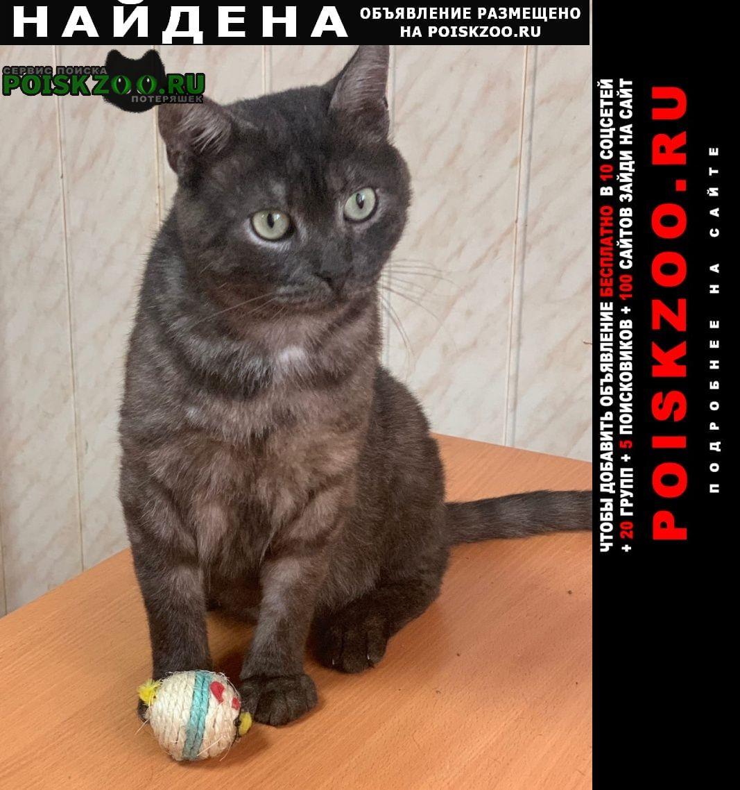 Найден кот Орехово-Зуево