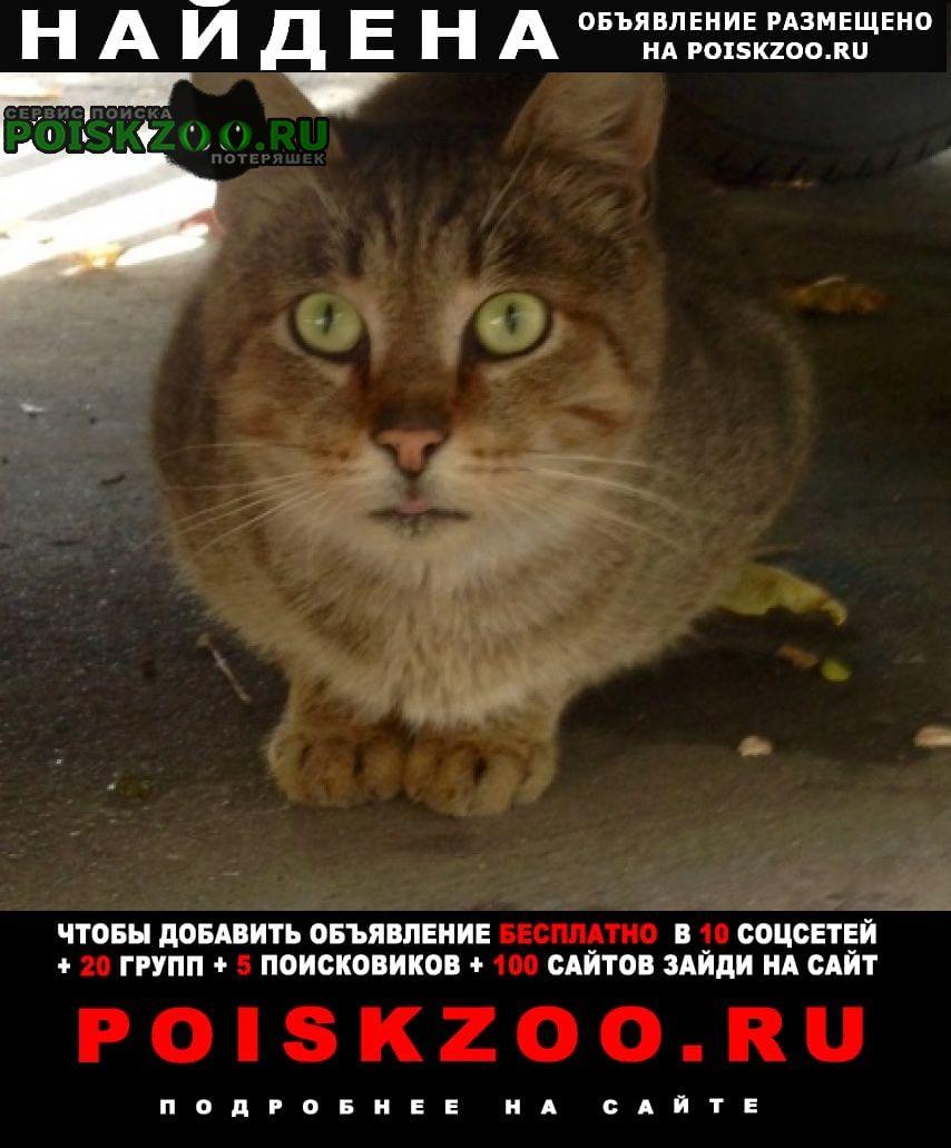 Москва Найдена кошка бибирево