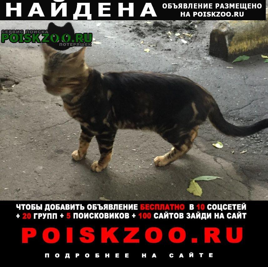 Найдена кошка на улице Москва