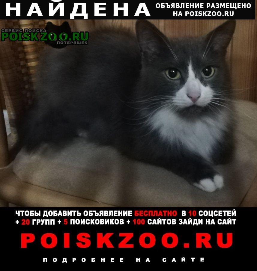 Найден кот ищу старых или новых хозяев Обнинск