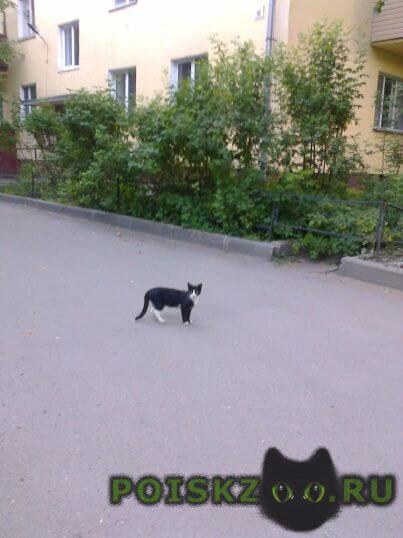 Найдена кошка г.Вологда