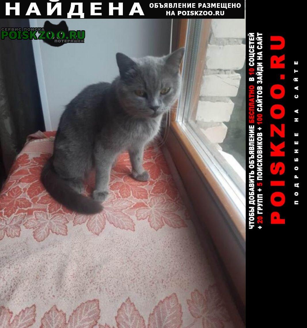 Найдена кошка домашняя (тц салют) Пенза