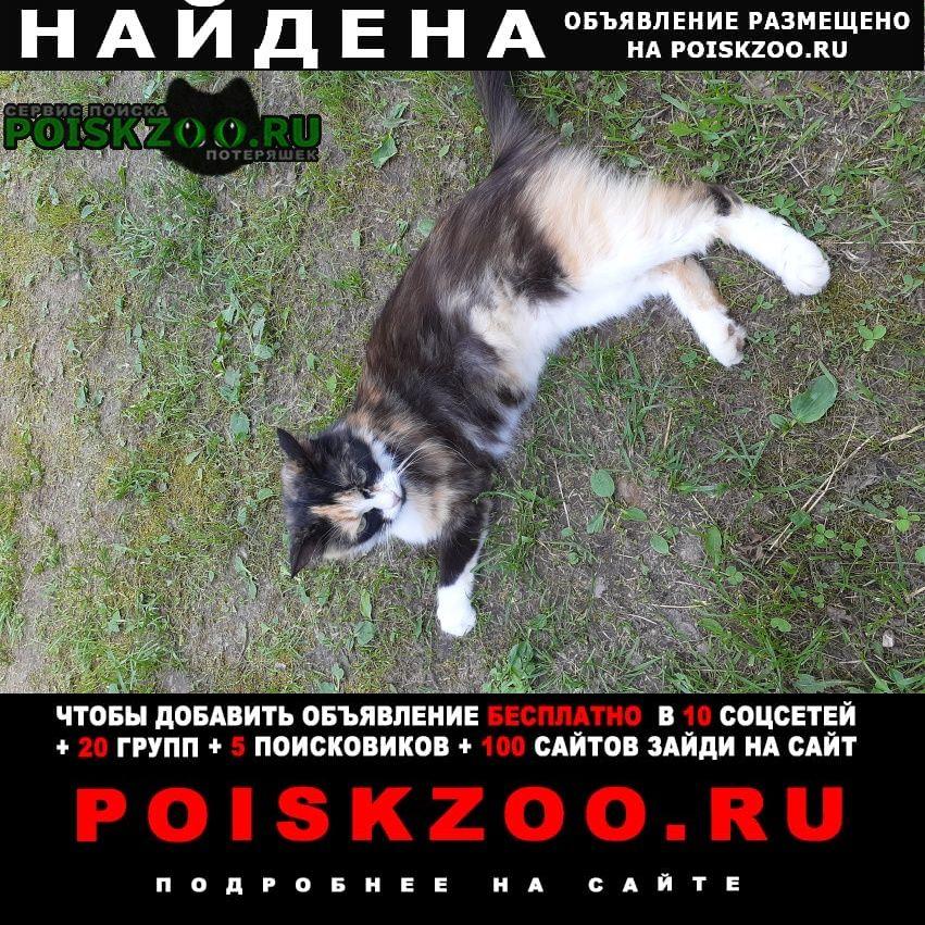 Найдена кошка трехцвеная Истра