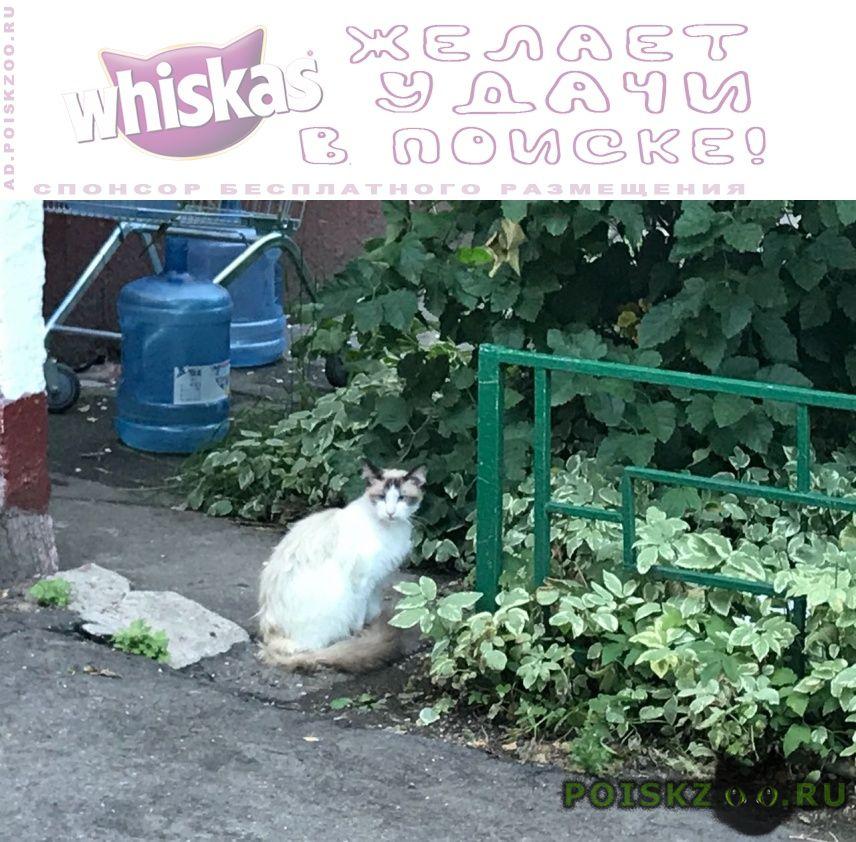 Найден кот около дома появился г.Москва