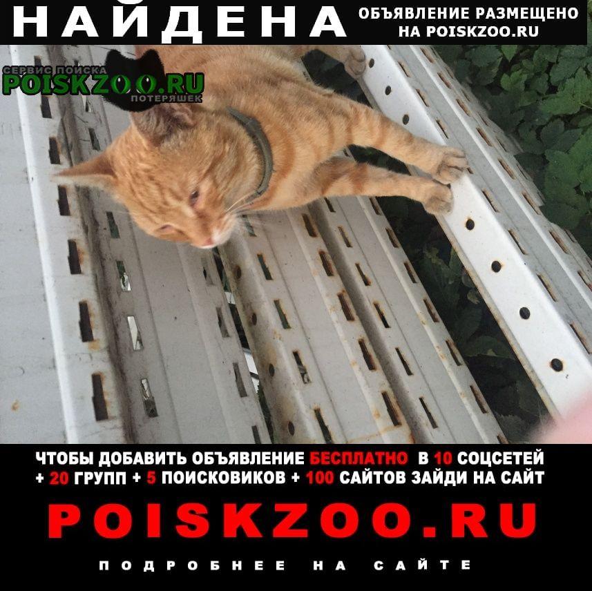 Найдена кошка кот рыжий с серым ошейником Балашиха