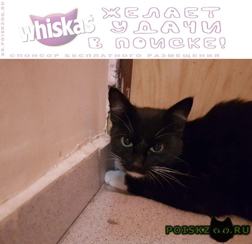 Найдена кошка черно-белая, молодая г.Москва