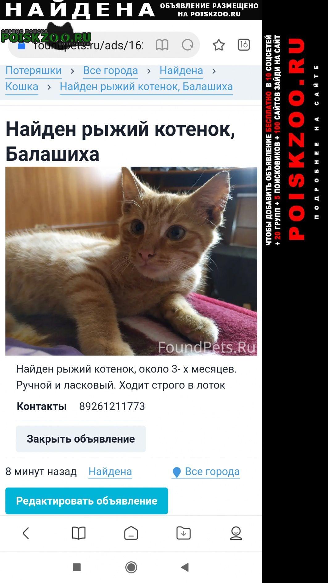 Найден кот енок. Балашиха