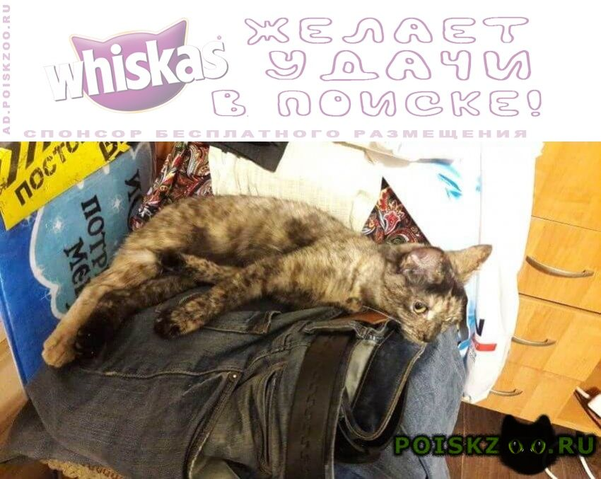 Найдена кошка г.Мурманск