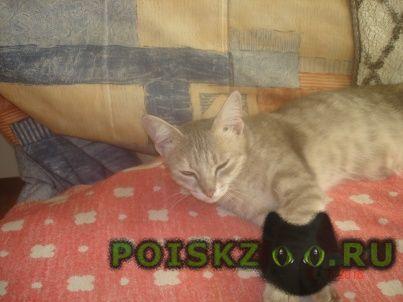 Найдена кошка потеряшка г.Тюмень