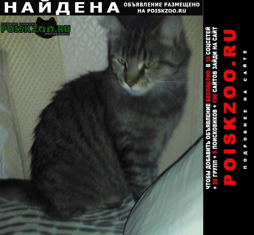 Найдена кошка г. чья потеряшка?. Воскресенск