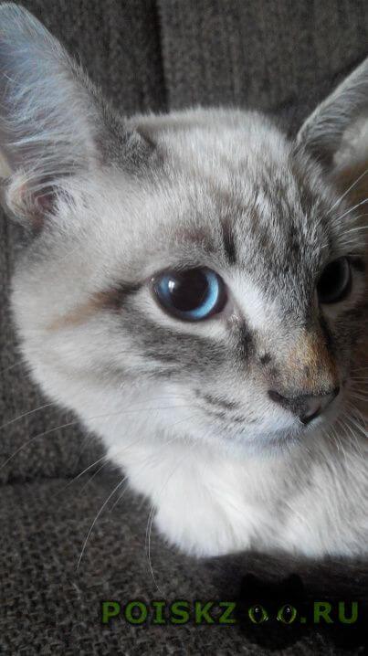 Найден кот -подросток г.Казань