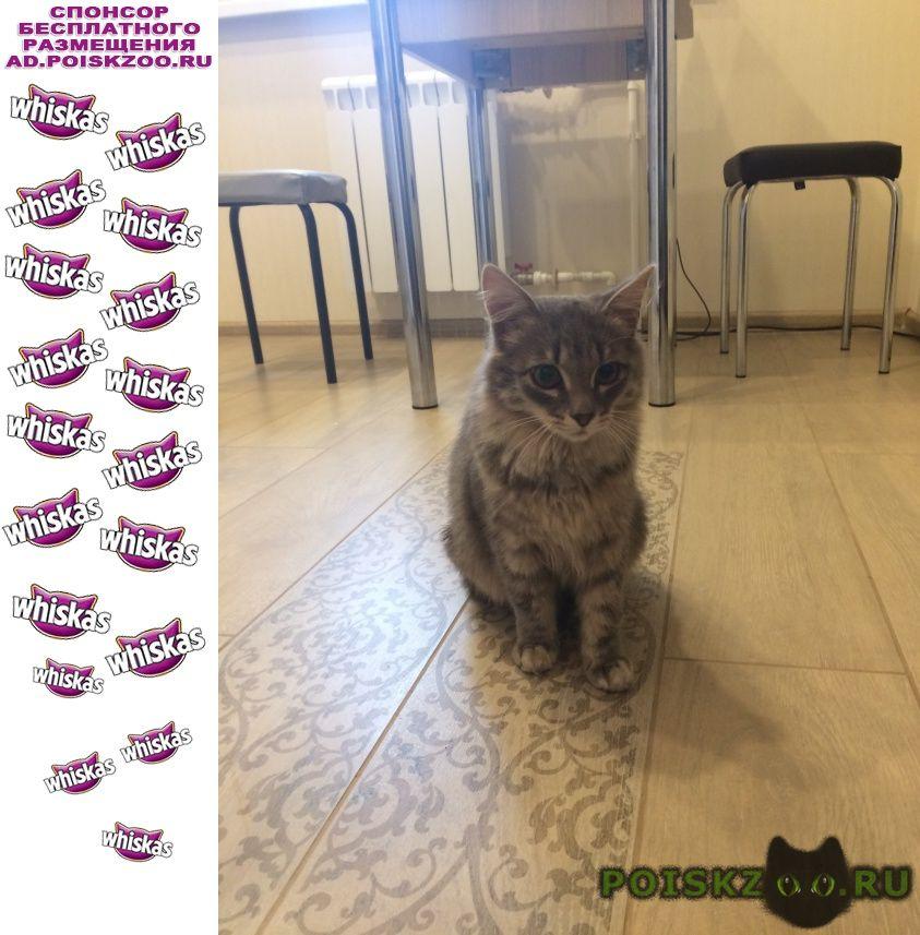 Найдена кошка г.Пушкино