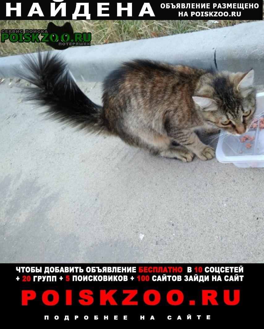 Найдена кошка с беличьим хвостом Жуковский