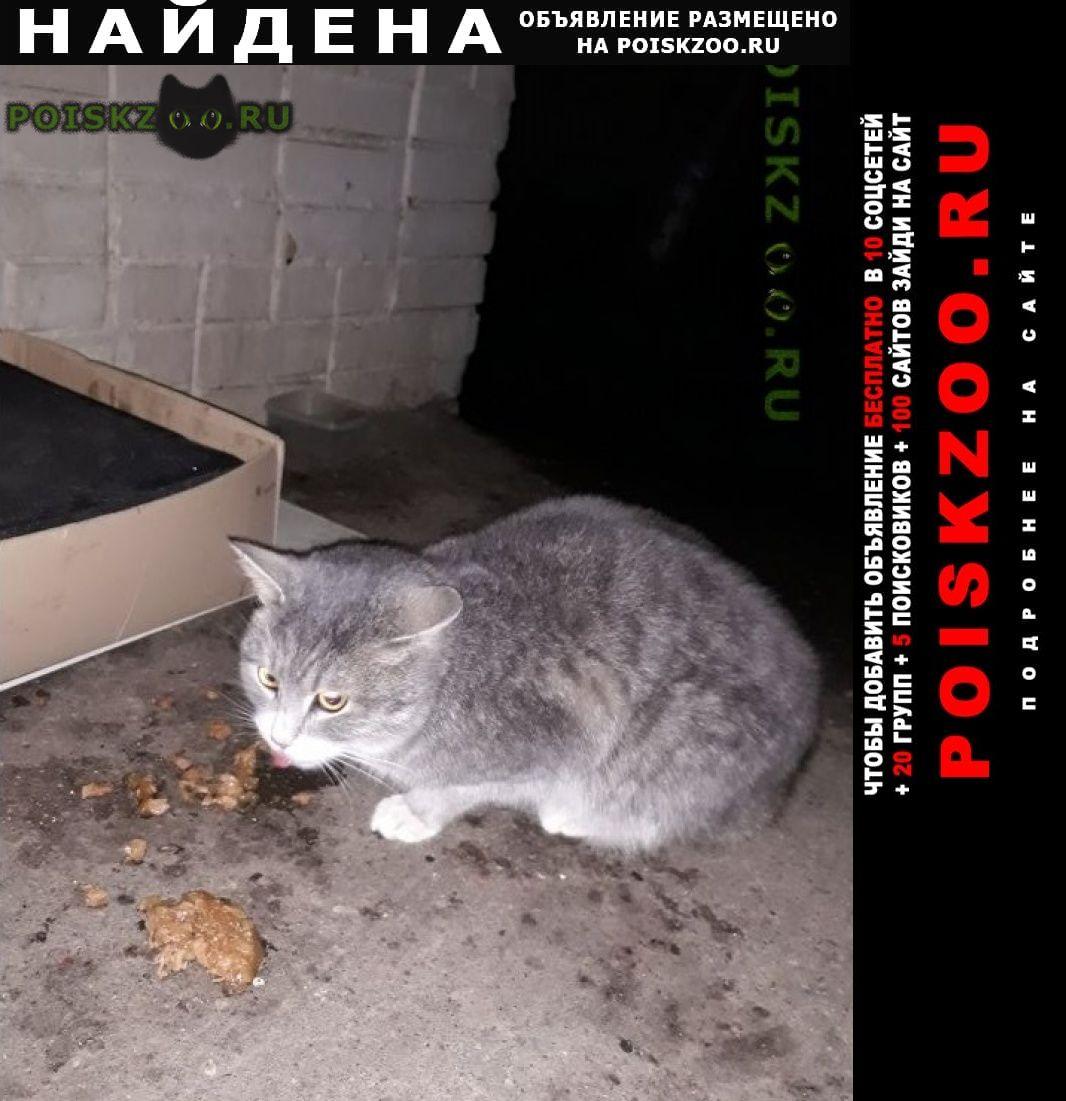 Найдена кошка серого цвета, гладкошерстная Красногорск