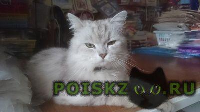 Найдена кошка г.Тольятти