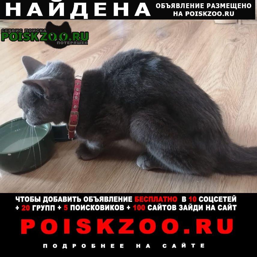 Найдена кошка с розовым ошейником Кашира