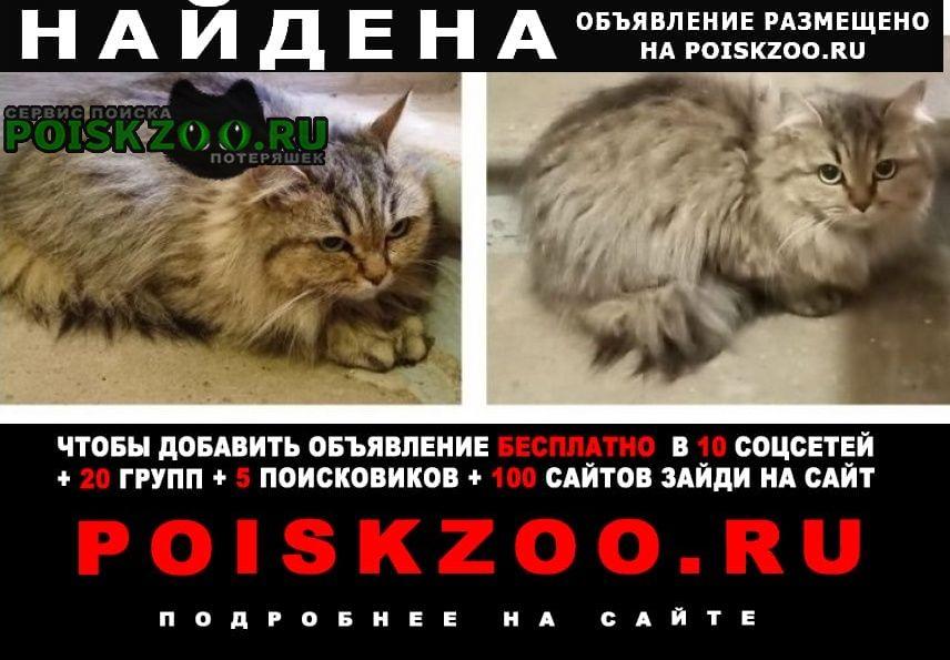 Найдена кошка домашняя в подъезде Москва