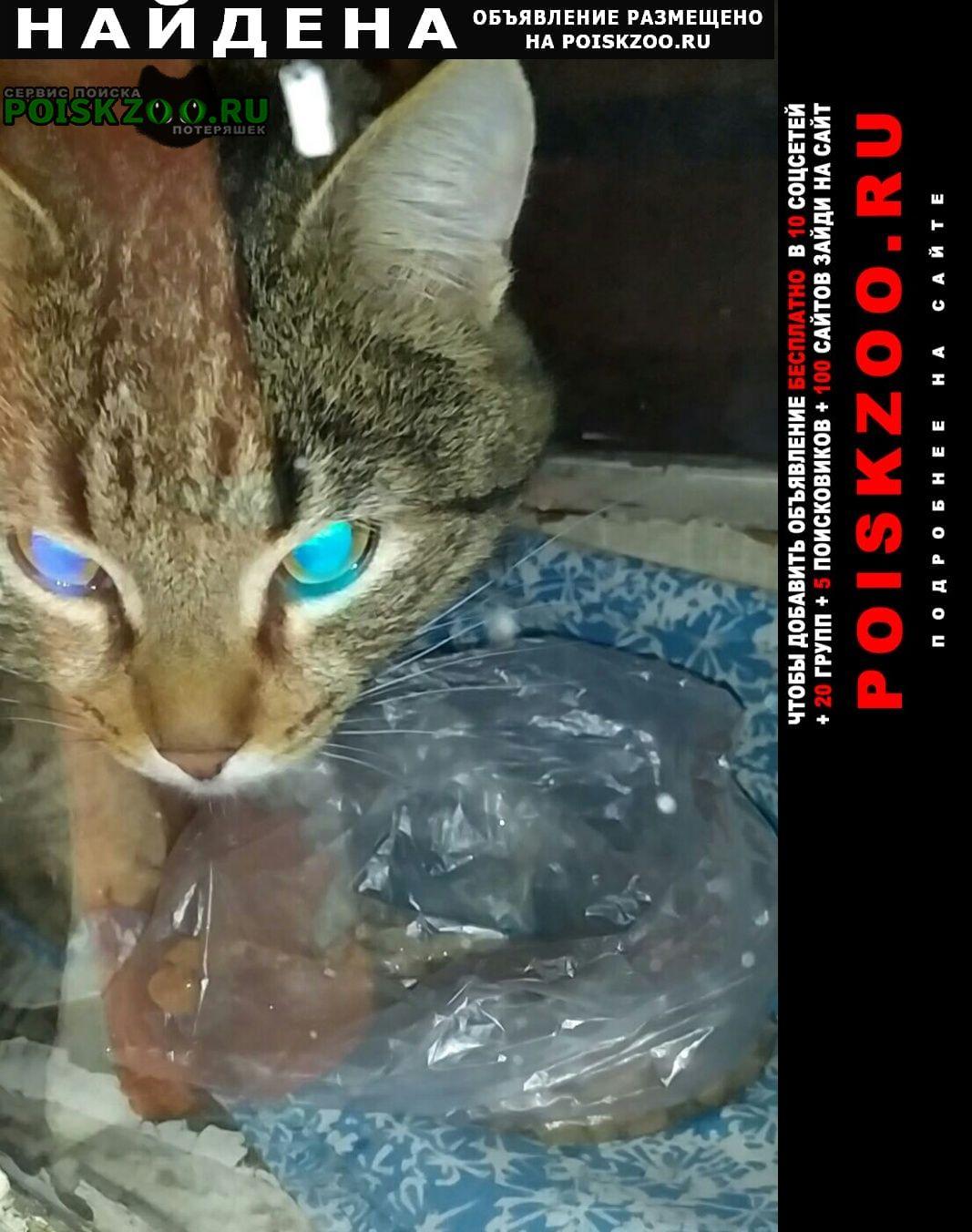 Найдена кошка кот Москва