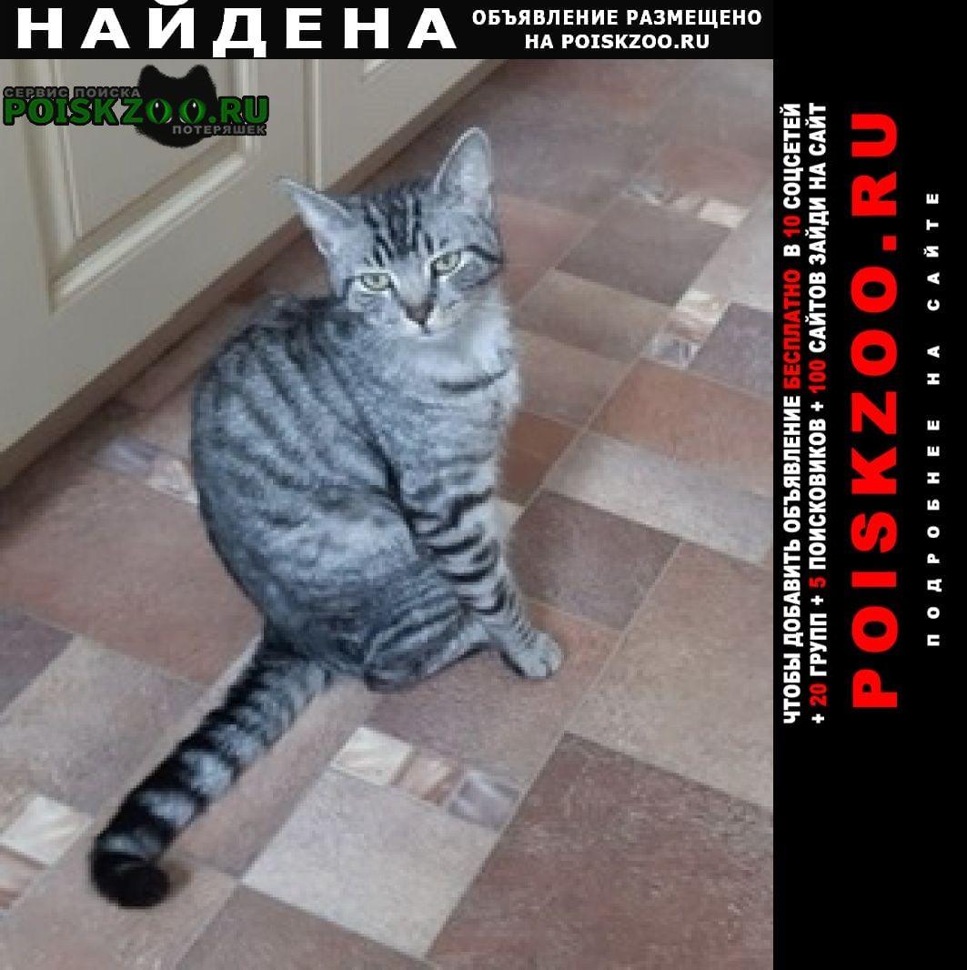 Найдена кошка Солнечногорск
