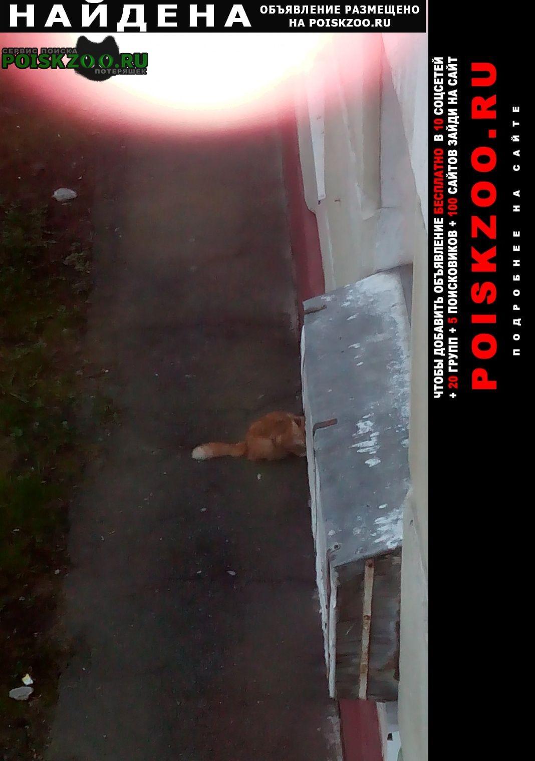 Найдена кошка московский район Санкт-Петербург