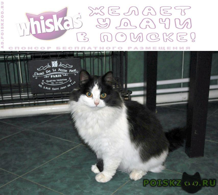 Найдена кошка очень красивая г.Серпухов