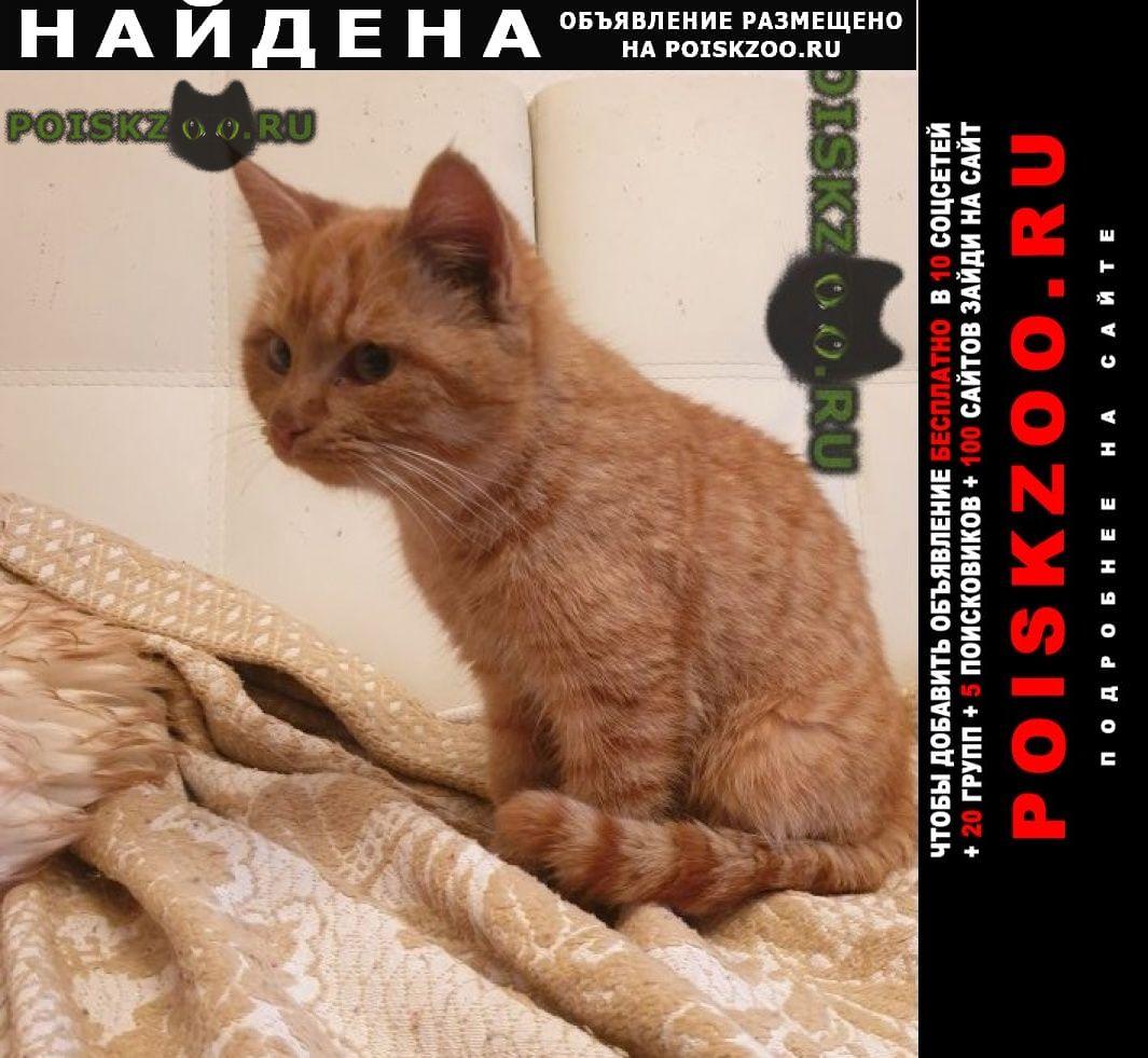 Найдена кошка рыжая г.Москва